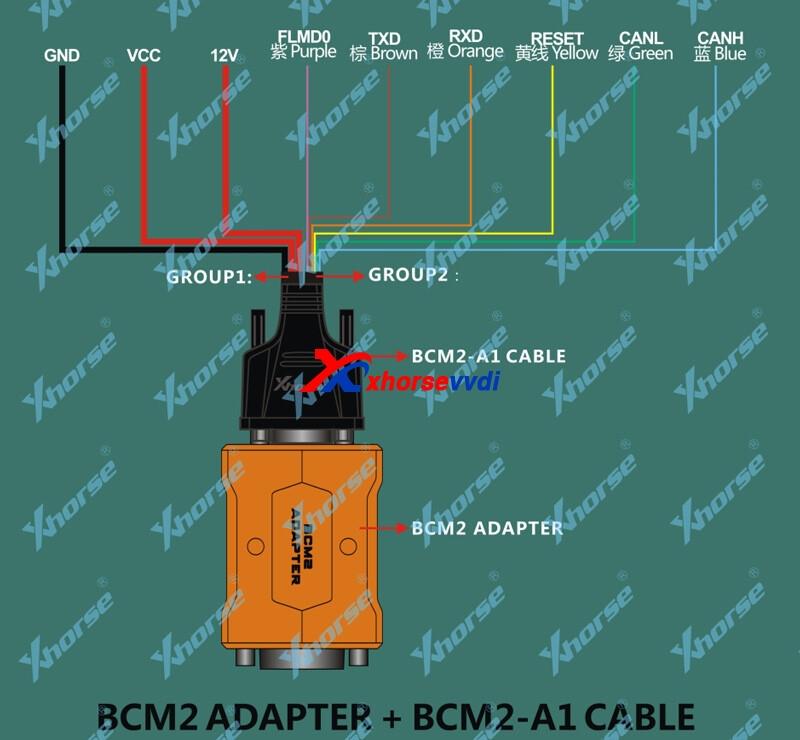 BCM2-a1